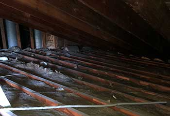 Commercial Rodent Removal in Deer Park | Ducts & Attic Cleaning Experts Deer Park, TX