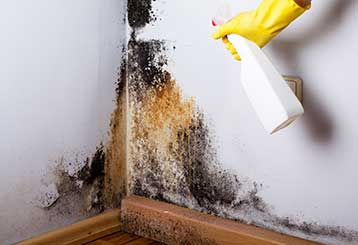 Mold Remediation & Removal | Ducts & Attic Cleaning Experts, TX