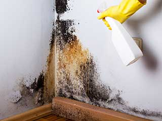 Mold Remediation & Removal Services | Ducts & Attic Cleaning Experts, TX