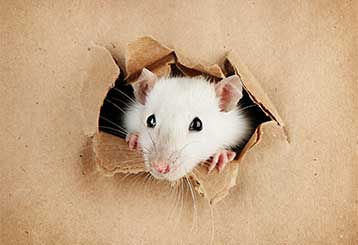 3 Most Common Reasons to Call for Rodent Proofing Services | Ducts & Attic Cleaning Experts, TX